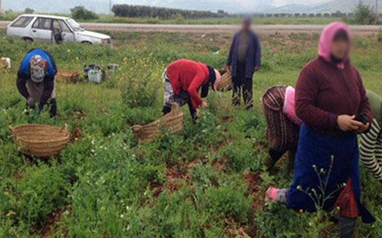 تونس تحتفي باليوم العالمي للمرأة الريفية